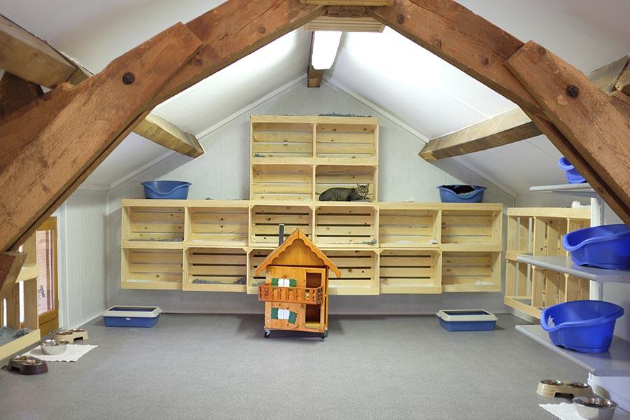 chatterie du point du jour pension pour chats essertines sur rolle. Black Bedroom Furniture Sets. Home Design Ideas